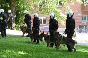640px-Swedish_police_dogs