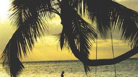 palm-tree-918558_960_720